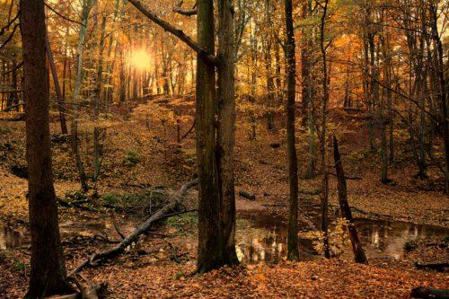 mimozami-jesien-sie-zaczyna